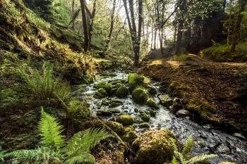 Hawkcombe Woods, Porlock, Somerset
