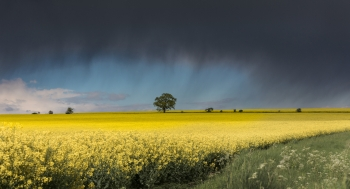 Pewsey Vale, Wiltshire